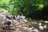 윤선과 16마리의 개들, 강원도 화천