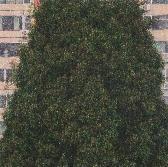 붉은 나무